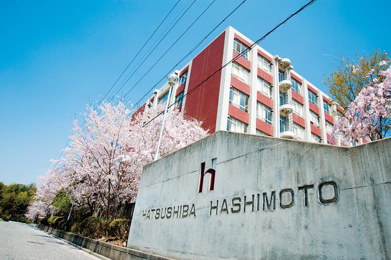 hatsushiba_hashimoto