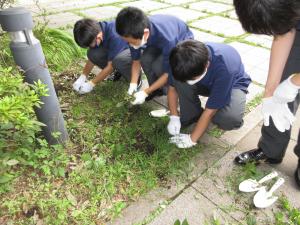 中学環境リサイクル委員がお花を植えました!