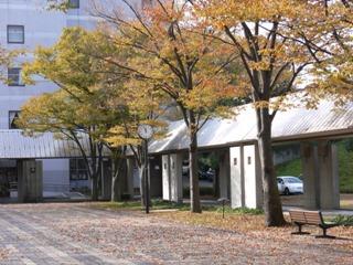 紅葉が進み落ち葉で一杯の学園通り