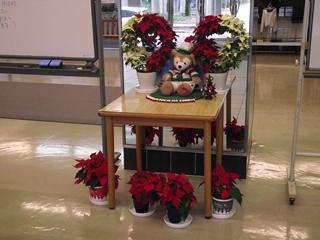 玄関にもポインセチアが。クリスマスの季節です。