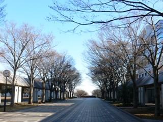 冬の学園通り
