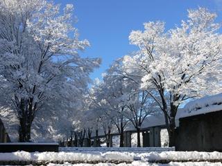 雪景色の学園通り 今週も日本各地で大雪でしたね