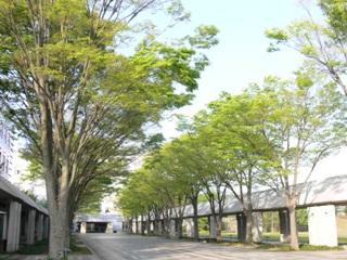 5月10日(木)の入試相談会で新緑の学園通り をお楽しみください