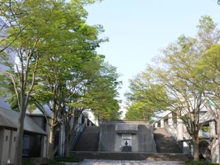 新緑の学園通り 創設者コタカの胸像がほほ笑む