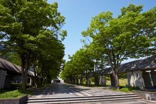 夏の青空の下の学園通り。欅並木の木陰がありがたい季節です!
