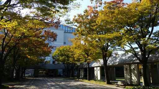 紅葉が美しい秋のキャンパス