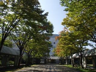 季節は秋に向かって少しずつ進んでいます。欅並木から感じられる季節の変化。