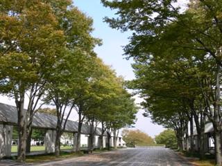 9月入ると学園通りも急ぎ足で紅葉が始まります。説明会で美しい紅葉をお楽しみください。