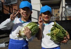 秋野菜の収穫1