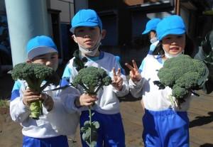 秋野菜の収穫2