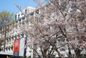 桜202102