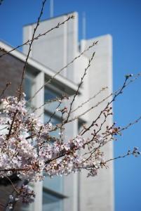 桜202101