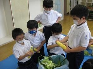 東星学園 校長 大矢正則 清瀬 私立 小学校  1年生 とうもろこしの皮むき体験(4)