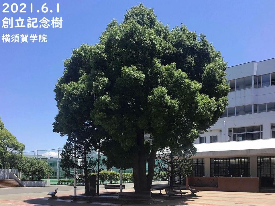 02.②開院記念・植樹式2021060920210601・01創立記念樹a